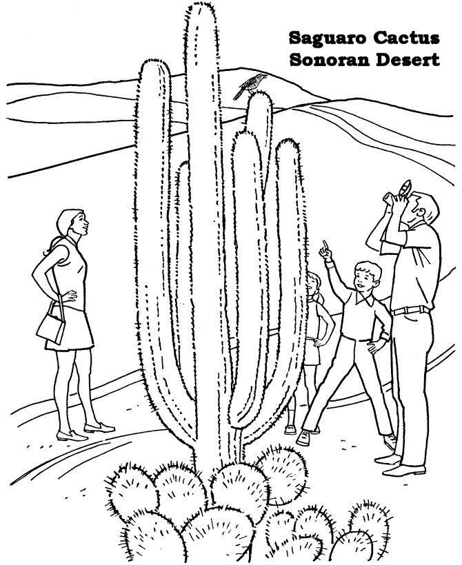 95 best images about Desert Habitat ideas on Pinterest
