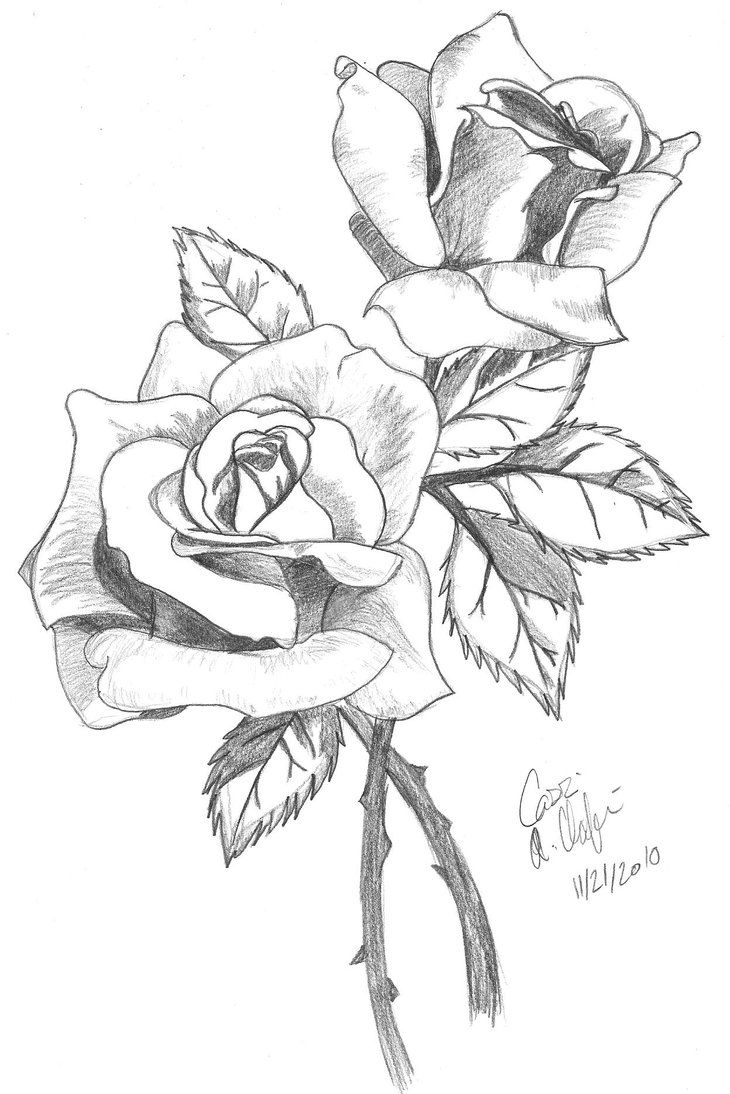 Rose Drawings In Pencil Rose Drawing In Colored Pencil