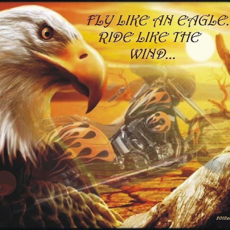 Fly Like An Eagle Ride Like The Wind Biker Quotes