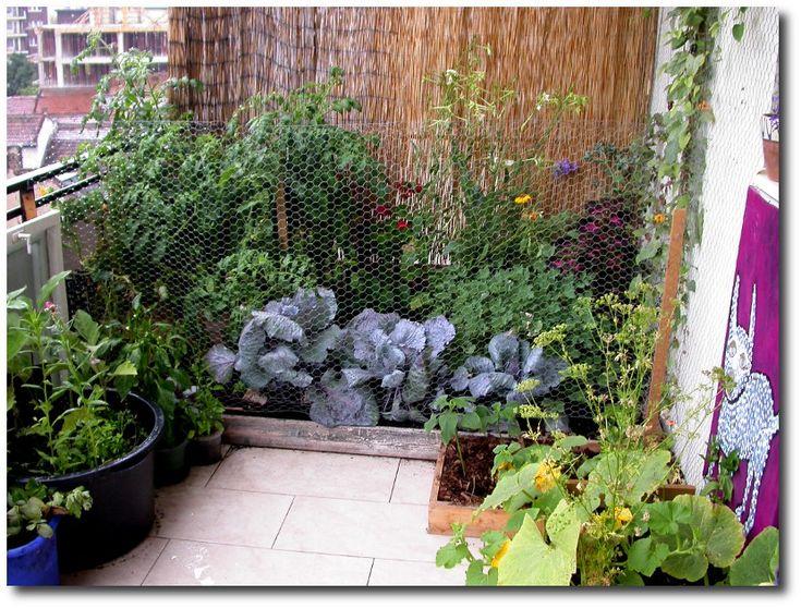 Les 90 Meilleures Images à Propos De Balcony Gardens Sur Pinterest