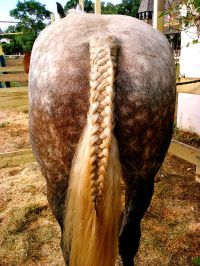horse hair braids styles best 20 horse hair styles ideas ...