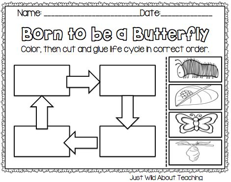119 best images about Life cycles/ Bugs Unit on Pinterest