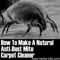 19 best images about curing a dust mite allergy on ...
