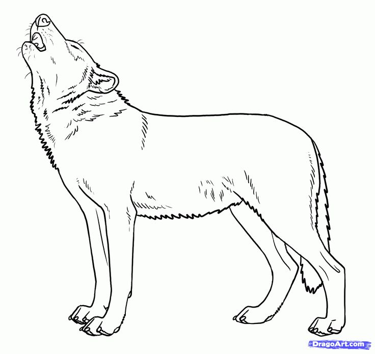 137 best images about wolf lineart ~ line art on Pinterest