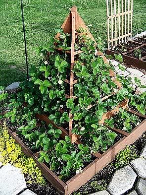 25 Best Ideas About Strawberry Planters On Pinterest Strawberry