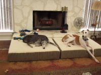 Kinds of Dog Beds for Greyhound   Kinds of dogs, Grey and ...