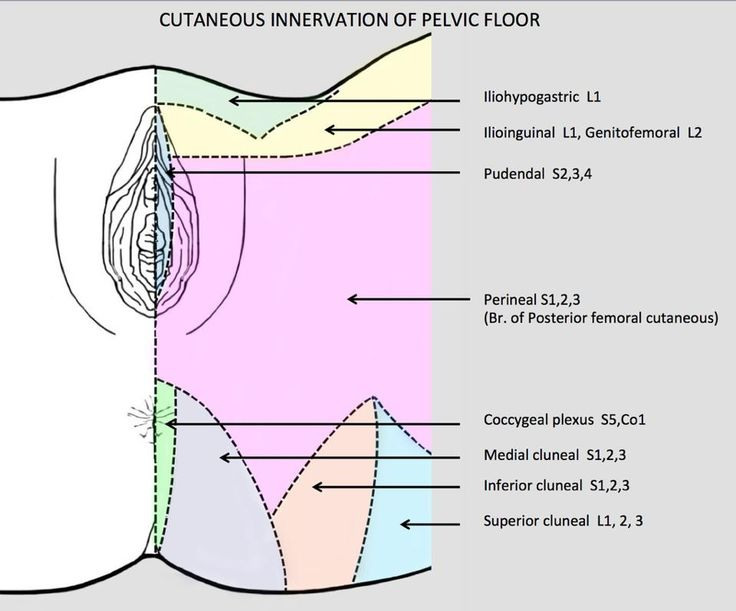 11 best images about Learn your Anatomy, fallopian tubes, bladder, on Pinterest ...