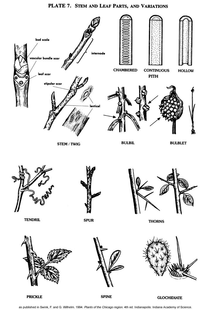 92 best images about Botany and Soil on Pinterest