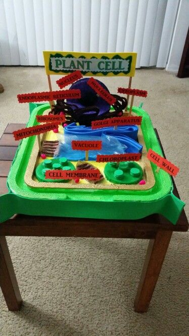 3d animal cell diagram vw polo 9n radio wiring plant project by bianca a.rivas 6th grade.   science pinterest plants, projects and ...
