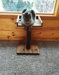 1000+ ideas about Cat Perch on Pinterest | Cat furniture ...