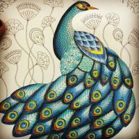 Peacock from Animal Kingdom #animalkingdom #milliemarotta ...