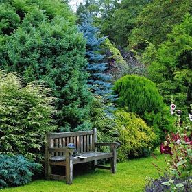 108 Best Images About Conifers On Pinterest Evergreen Garden