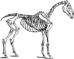 33 best images about esqueletos en el closet on Pinterest