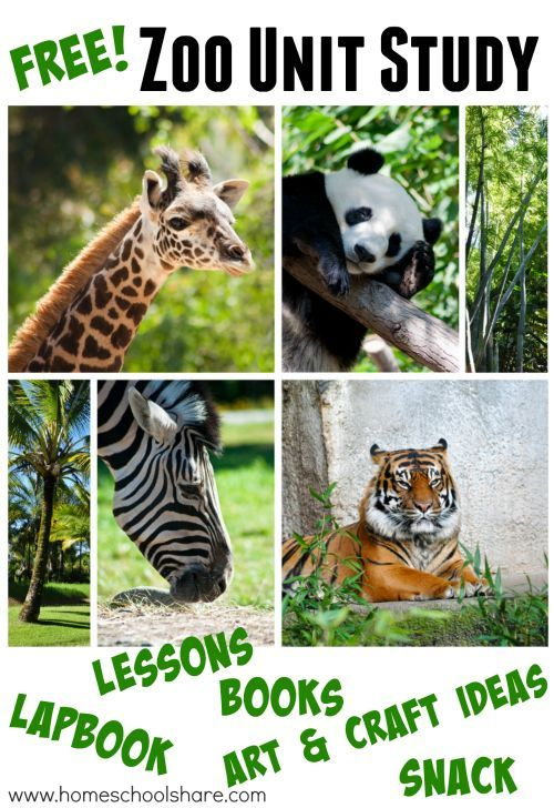 17 Best Images About PS Zoo On Pinterest Jungle Animals