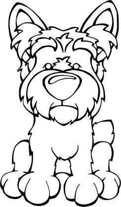 2229 best images about Yorkshire Terriers on Pinterest