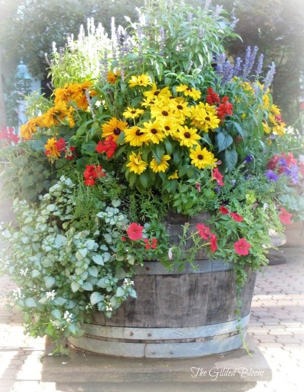 347 Best Images About Outdoor Flower Container Ideas On Pinterest