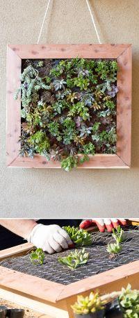 25+ best ideas about Succulent wall gardens on Pinterest ...