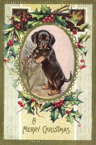 17 Best Images About Vintage Doxie Valentines On Pinterest