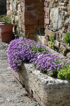 78 Ideas About Garden Troughs On Pinterest Large