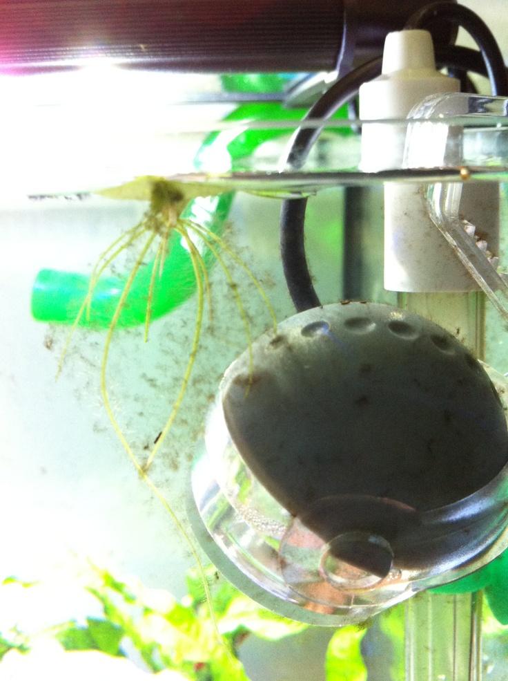17 Best Images About Aquarium Affliction On Pinterest