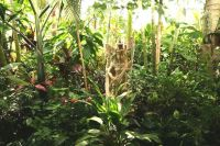 22 best images about Tropical gardens in temperate ...