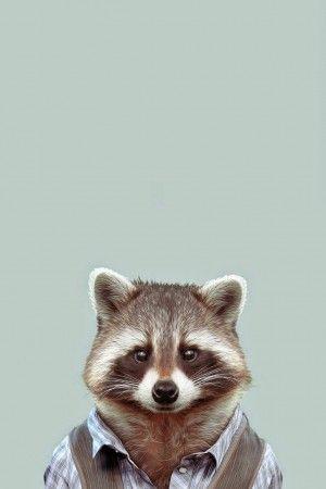 Cute Kittens Wallpaper For Iphone Yago Portal Zoo Portraits Common Raccoon Iphone 6 Plus Hd