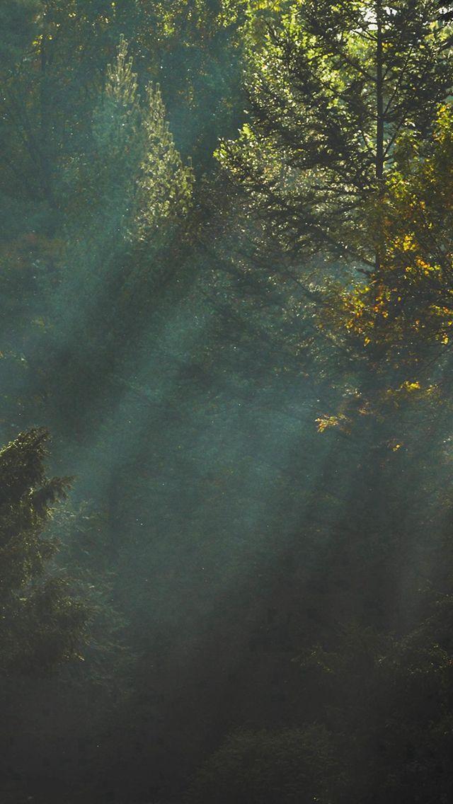 Good Evening Hd Wallpaper Wood Nature Tree Sunshine Light Iphone 5s Wallpaper