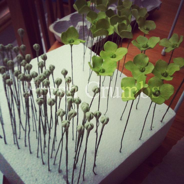 Gumpaste Hydrangea Buds and Flowers June 1st 2012