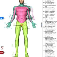 Knee Diagrams Anatomy Of A Booster Pump Control Panel Wiring Diagram The Dermatome Map From Free Study Guide App By America's Navy. Includes ...