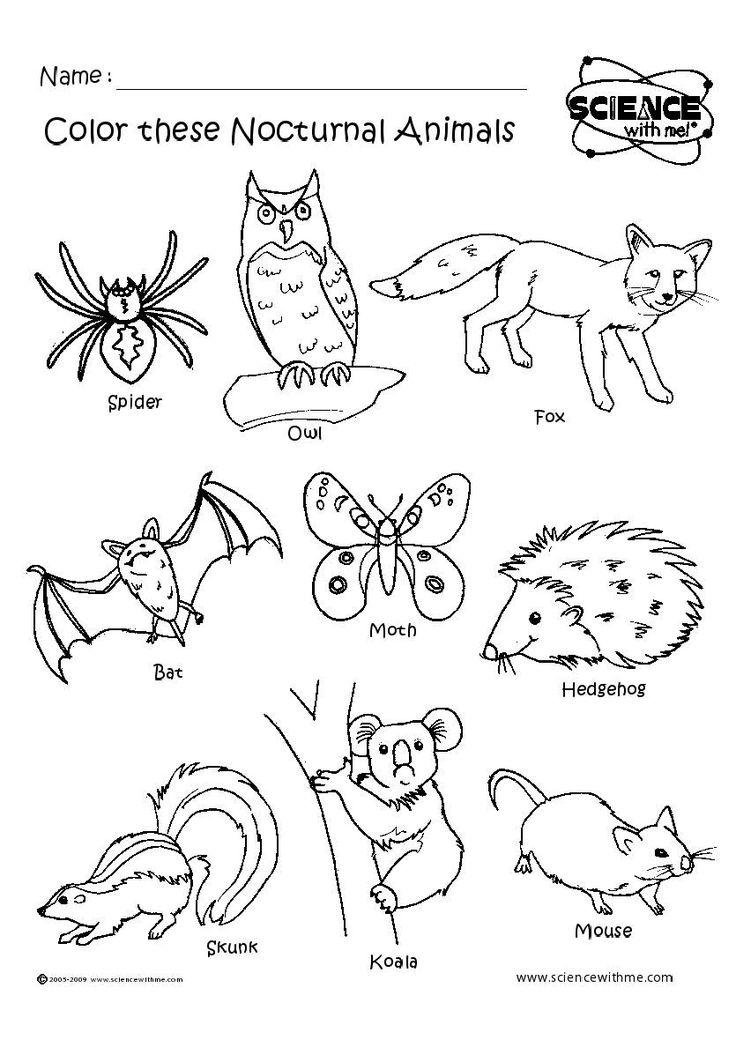 Angol feladatok, mondókák, színezők: Nocturnal animals