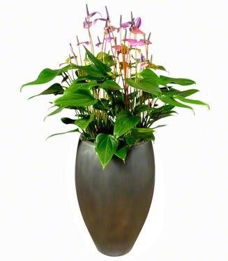 Gemakkelijke kamerplanten  Mooie potten  Chicplants