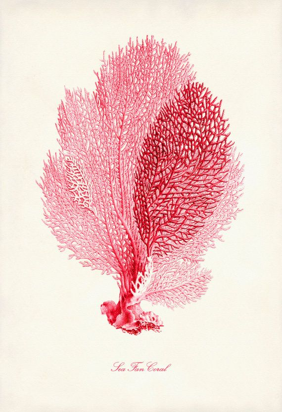 Coral Pink Sea Fan Coral Print Poster of Pink Coral Beach House Decor Beach Art Nautical
