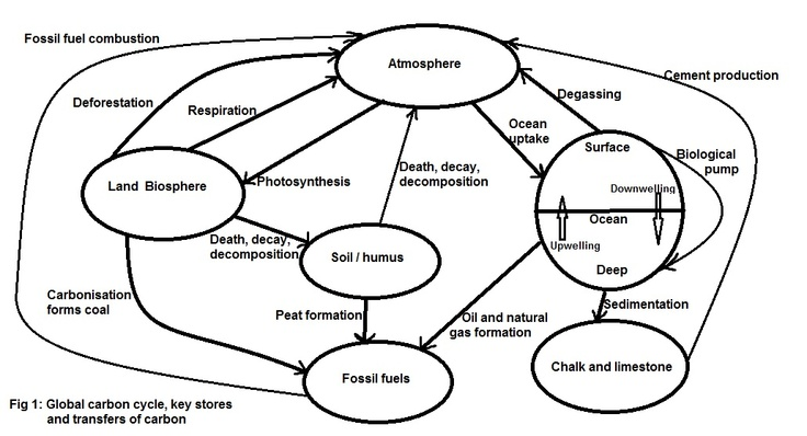 28 best images about HS-LS2-5 Carbon Cycle on Pinterest