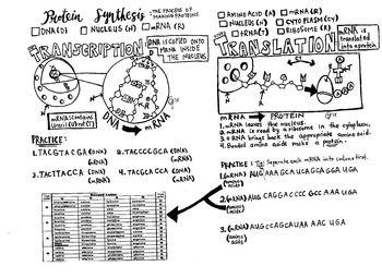 25+ best ideas about Translation biology on Pinterest