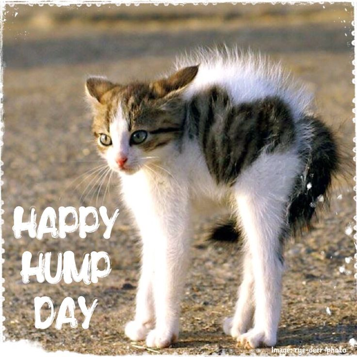 Fall Kittens Wallpaper Wednesday Humor Happy Hump Day Animal Funny Cute Cat