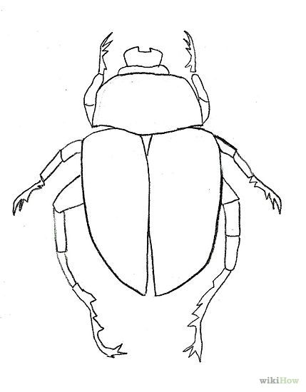 dung beetle diagram