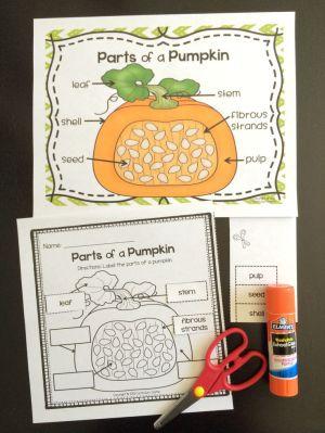 Pumpkin Investigation Unit: All About Pumpkins {Life Cycle