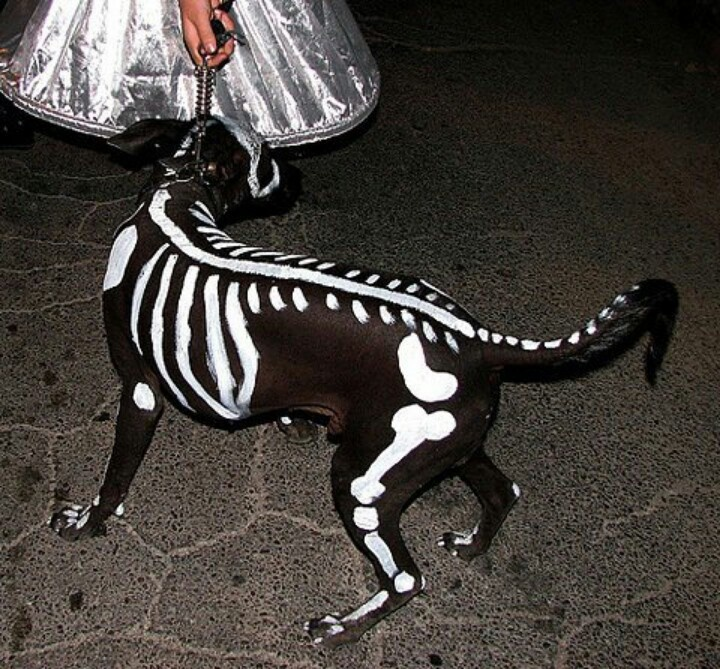 Dog costume...very clever!