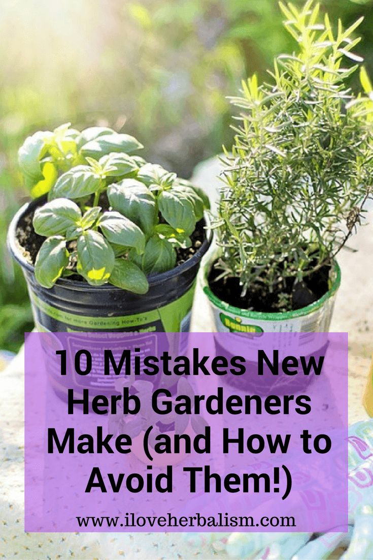 25 Best Ideas About Diy Herb Garden On Pinterest Indoor Herbs