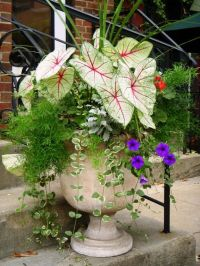 25+ best ideas about Outdoor Pots on Pinterest | Potted ...
