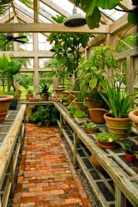 Best 20+ Greenhouse ideas ideas on Pinterest | When to ...