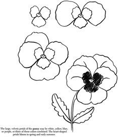 Best 25+ How to draw flowers ideas on Pinterest
