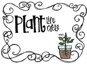 80 best images about Science Unit: Plant Life Cycle on