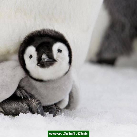 Cute Funny Babies Hd Wallpapers Baby Pinguin Jubel Club Pinterest Babies