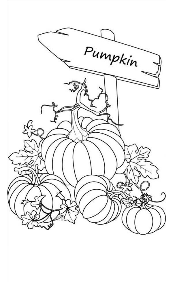 De 20+ bästa idéerna om Pumpkin patterns på Pinterest