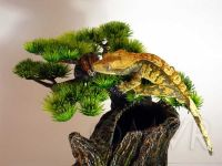 17 Best images about Crested Gecko Readiness on Pinterest ...