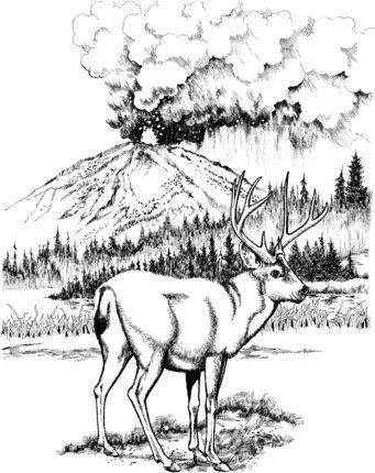 Click to see printable version of Mule Deer in Lassen