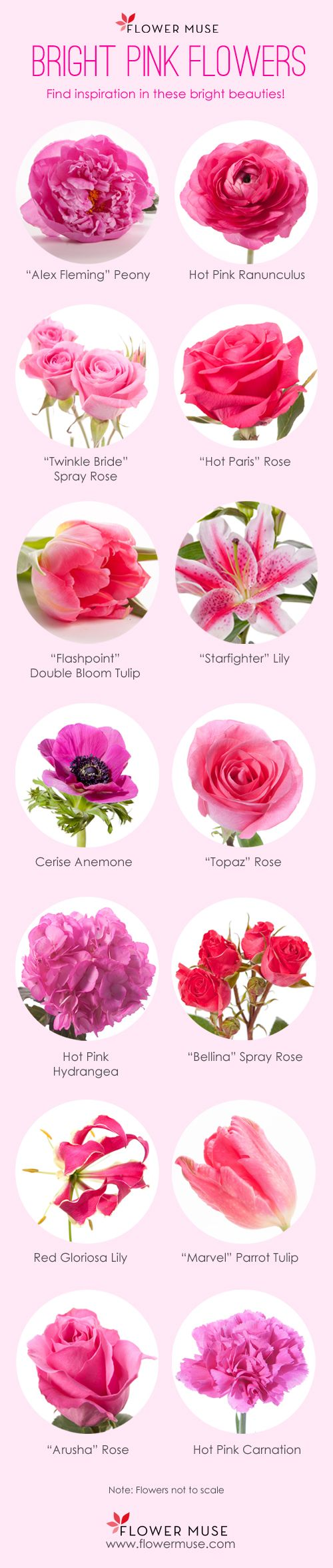 Pictures Of Pink Flowers And Name Wallsjpg