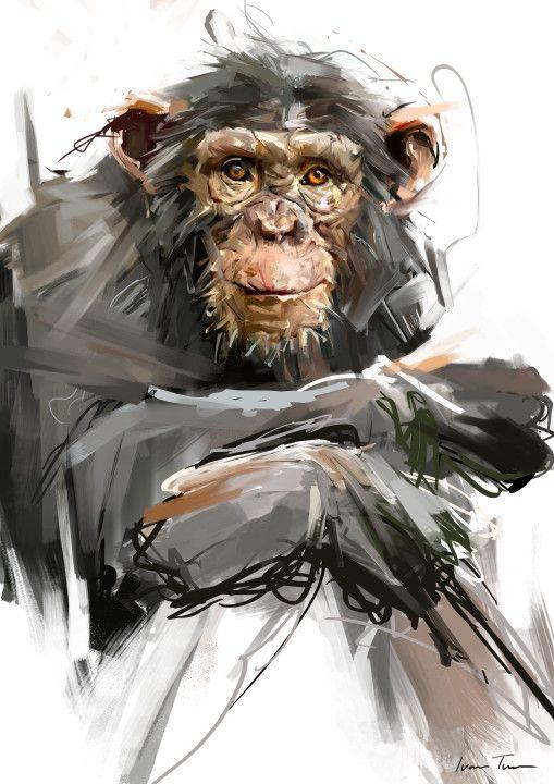 25 best ideas about Monkey Drawing on Pinterest Panda