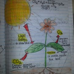 How To Create A Food Web Diagram Wiring Diagrams For Trucks Photosynthesis   Travis 4th Grade Science Journal Pinterest Sun, Notebooks And Plants